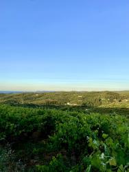 Anoskeli Olive groves