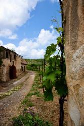 Anoskeli vineyards