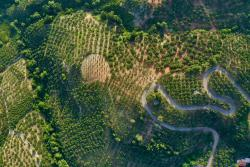 Anoskeli olive groves and vineyards